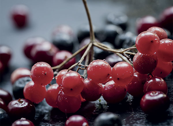 cranberry-image